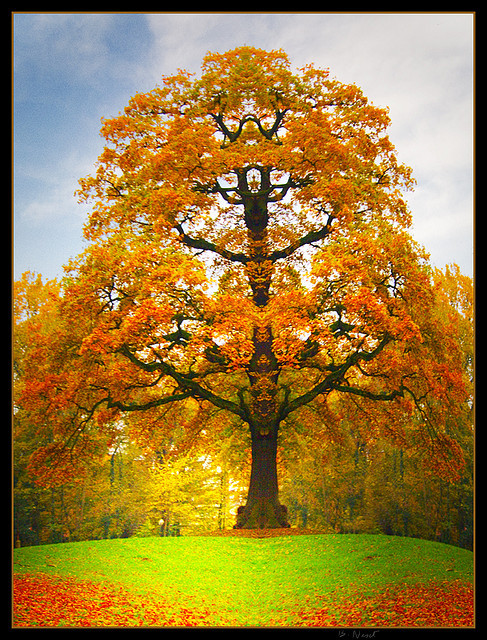 Rorschach Tree by Dirk Delbaere on Flickr.