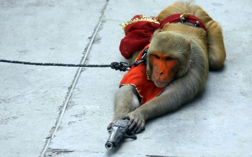 A monkey enacts taking aim with a toy pistol as he is made to perform in a street in Amritsar, India. Although they are banned in India, monkey street performances are still a popular form of entertainment.  Picture: EPA/RAMINDER PAL SINGH