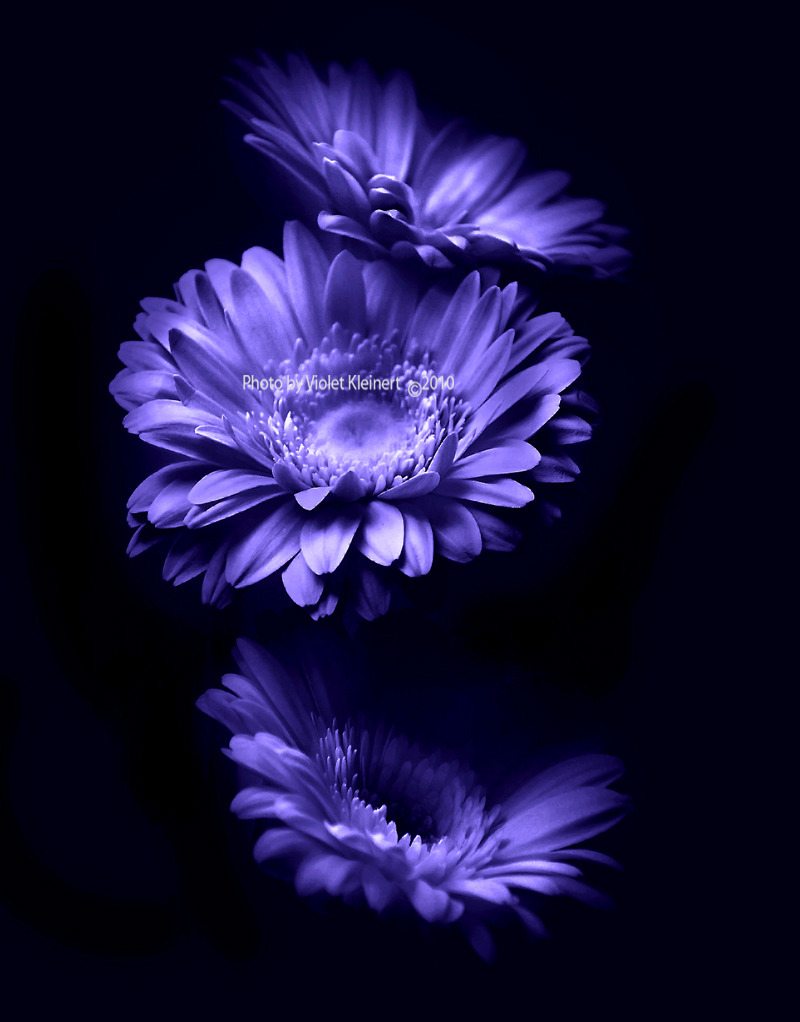 Moonlight Flowers by *Violet-Kleinert