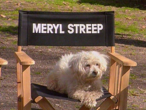 immerylfuckingstreep:  SO WHAT? SOMETIMES IMMA DOG.  YALL CAN HATE BUT IM 2 BUSY SHAPE SHIFTIN MOTHA FUCKAS.  it's chill