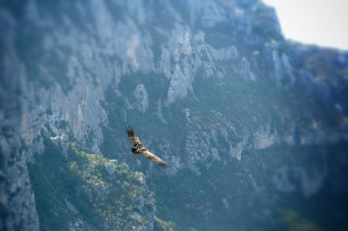 I giorni del Condor.. on Flickr.