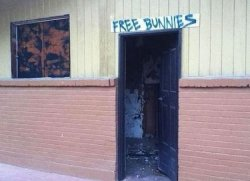 collegehumor:  Free Bunnies Over Creepy Door Same neighborhood as this?  Free bunnies where is this place