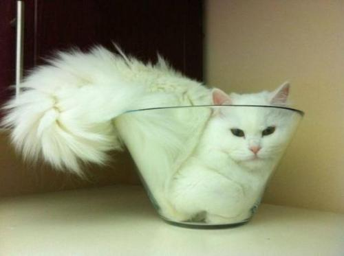 (via Liquid cat in bowl! - PandaWhale)