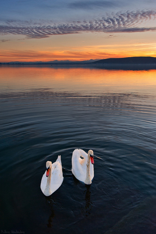 llbwwb:  Swan lake (by Nick-K (Nikos Koutoulas))