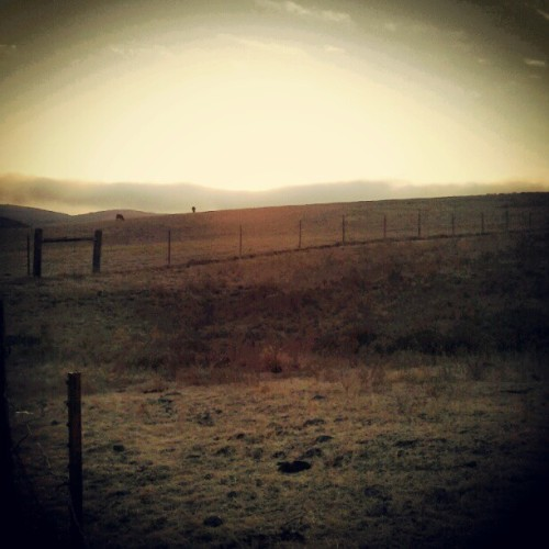 serpentinitic:  Made it to the #ranch again. When the world is ending you'll see me here. I like to pretend its the well from Animal Crossing where you can apologize for things you fucked up on (Taken with Instagram)