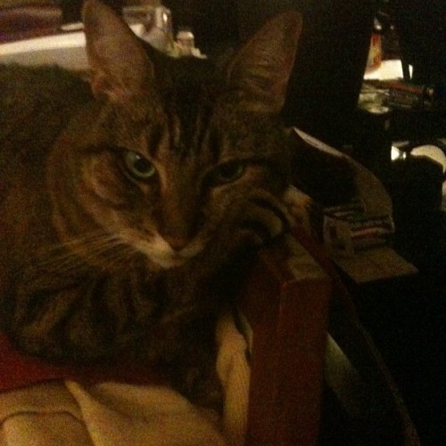 #bosscat chillin…. (Taken with Instagram)