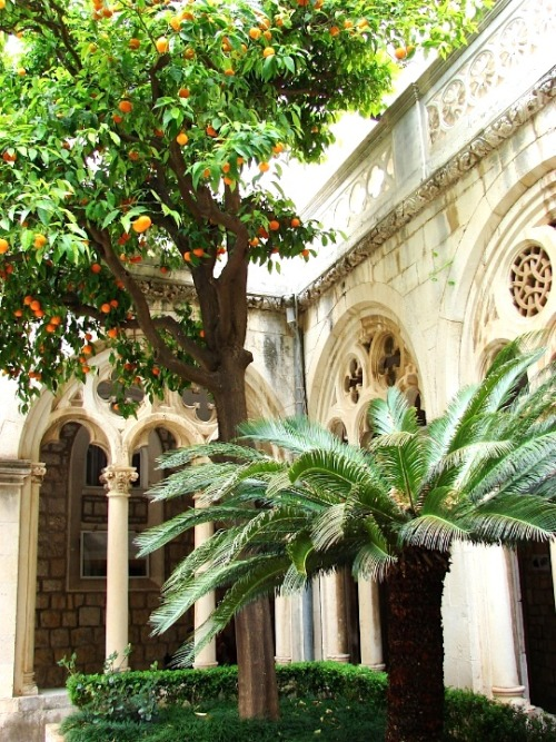 Orange tree at monastery - Dubrovnik  | by © felber