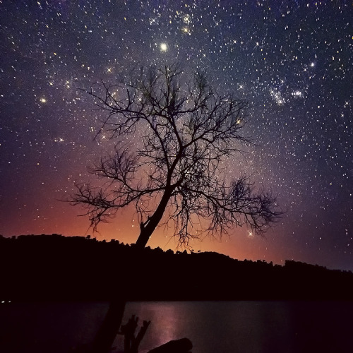 unknownskywalker:  Tree Stars by Esmar Abdul