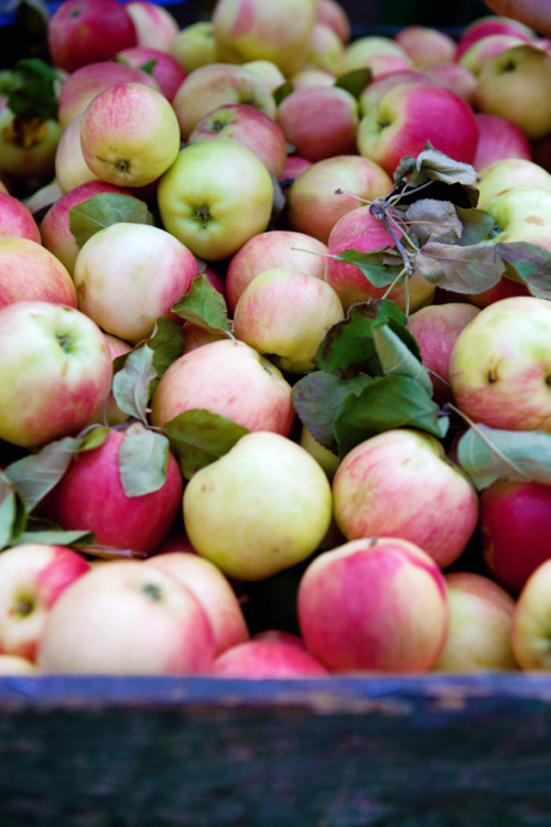 thefruitmarket:  first apples of the season (by cannelle-vanille)