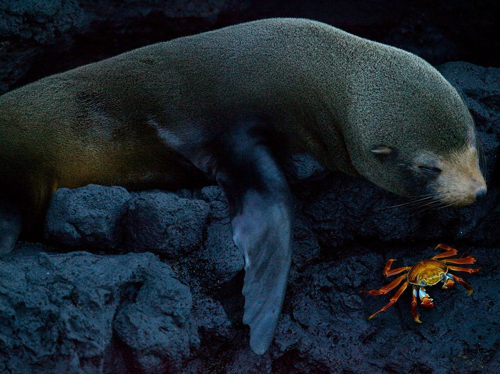 (vía Seal Picture — Nature Wallpaper — National Geographic Photo of the Day)