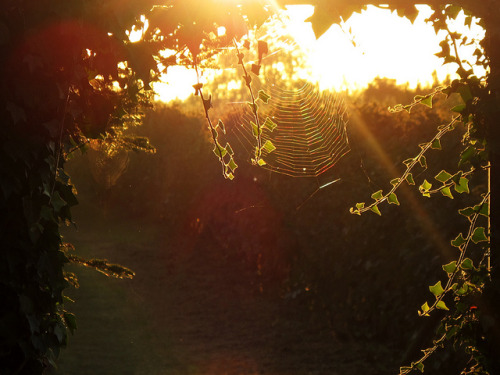 Morning light behind the Garden Gate by Batikart on Flickr.