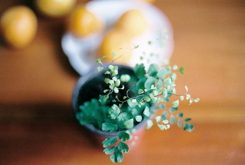 w4lrusss:  000006 by ♥ Joyce ♥ on Flickr.