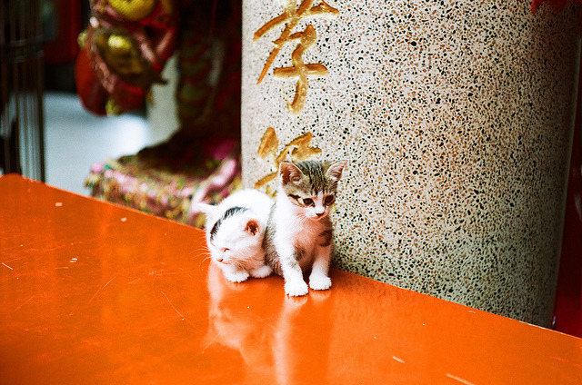 kittenjoy:  cat151 by pipa pipa on Flickr.