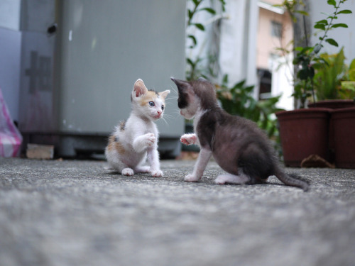 1 2 3 FIGHT! by 夢夢❤ on Flickr.