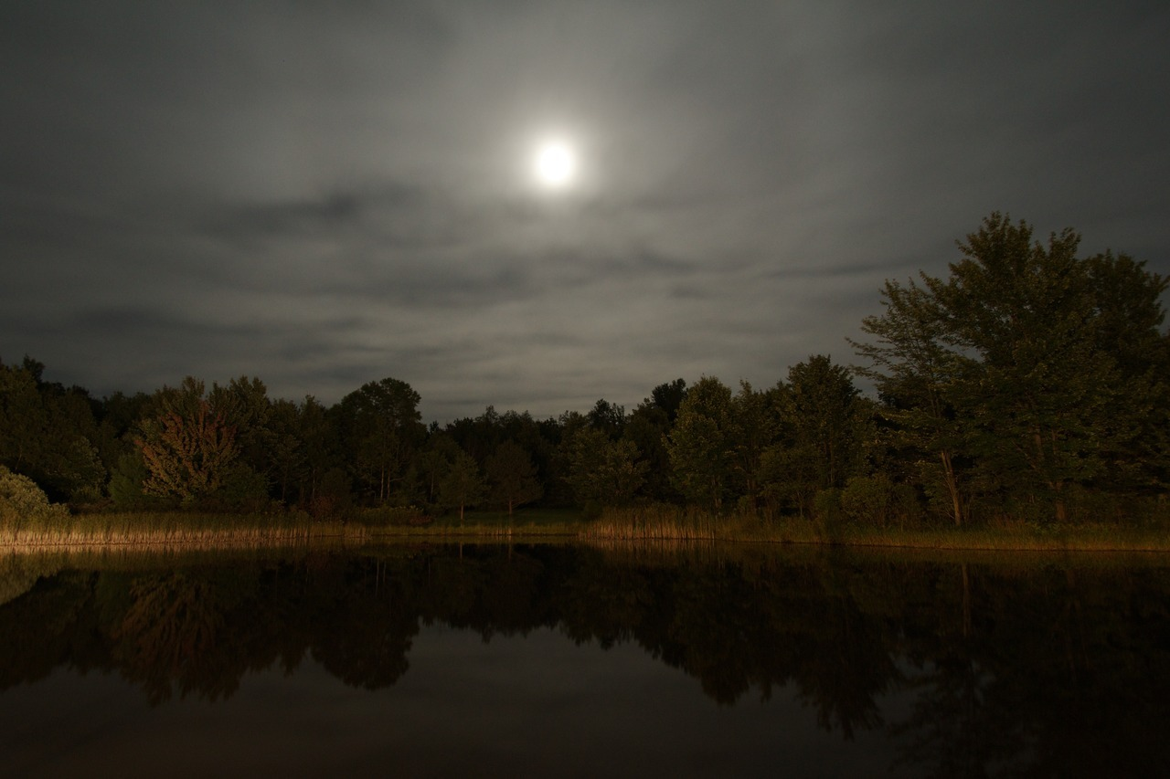 Moonlight over the pond C.F.B.