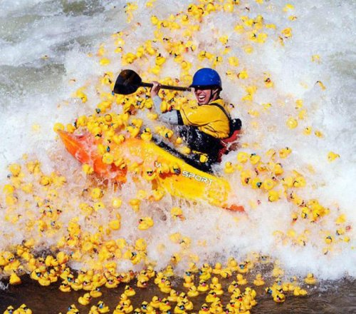 Kayaking through Rubber Ducks You just be careful goin' through those waters. That there's duck country. Cool duck country.