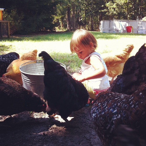 our chickens are well-loved #urbanfarming #backyardchickens #happybaby #blissedin #bexlifefarm #babysummer #bexkids  (Taken with Instagram)
