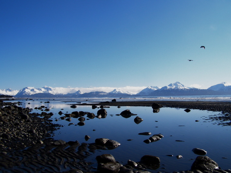 Clear blue skies in Bishops Beach, Homer, Alaska. Photo by Aleta, Matador member.