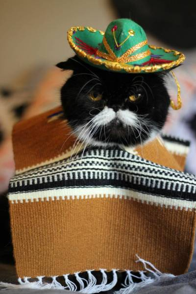 It's Friday. Who's ready to get this fiesta started?! (via Imgur)