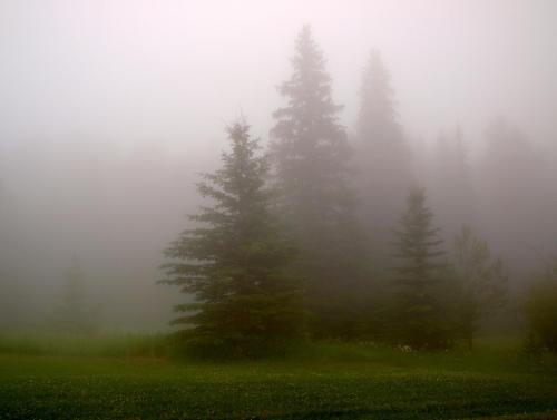 Trees in the Mist   Photo by Derek Thornton  View Post shared via WordPress.com