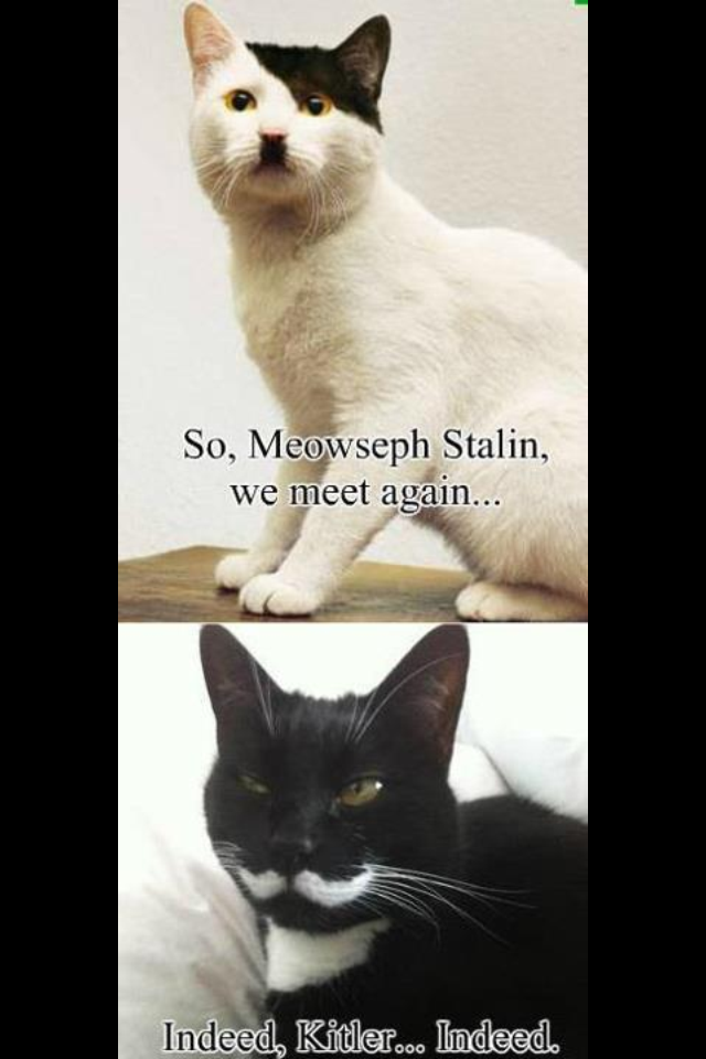 Kitler VS  Meowseph Stalin Who Wins?