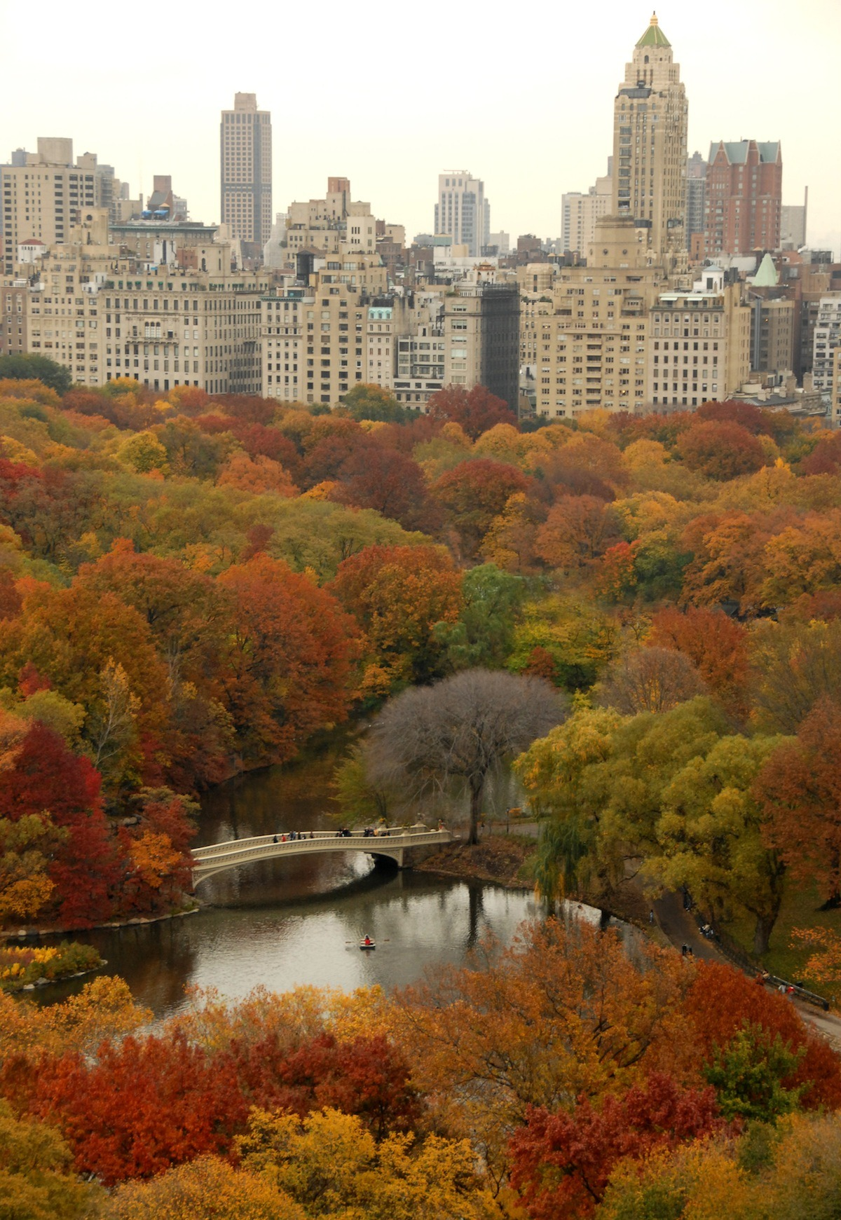 The Big Task of Managing Nature at New York's Central Park This one's important because it tackles not only the rules of the road for the care of Central Park, but so many natural environments around New York and elsewhere. It's no easy task keeping these landscapes safe, clean, and healthy. And that includes the NYBG's 50-acre Forest. President Charles A. Birnbaum of the Cultural Landscape Foundation, with input from our very own VP of Horticulture, Todd Forrest, does a wonderful job of explaining how the ride-on mower guy you see taking care of the Great Lawn is only the tip of an enormous iceberg. You'll also want to take a look at the links near the bottom of the piece, where Charles discusses the much-anticipated Central Park Woodlands conference coming October 5; it's an opportunity to hear from heads of some of the nation's top urban forests. —MN