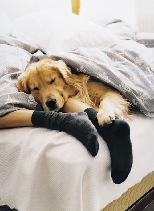 coffeestainedcashmere:  puppies that sleep in bed with you are the best…