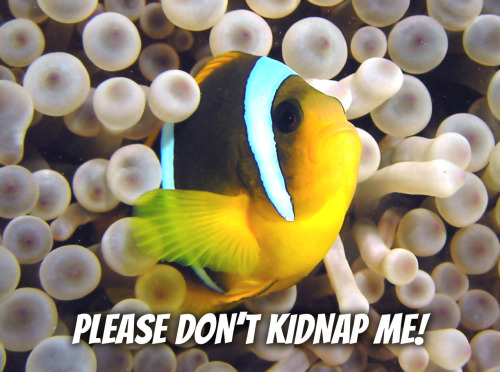 We're excited to see Finding Nemo in 3D this weekend! Plus, it's a great reminder of how much fish just want to live in the sea! http://bit.ly/Q9cONO