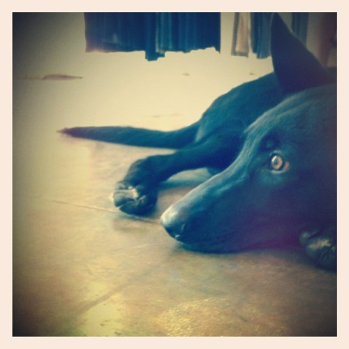 Kohl at the showroom for @haatichai  (Taken with Instagram)