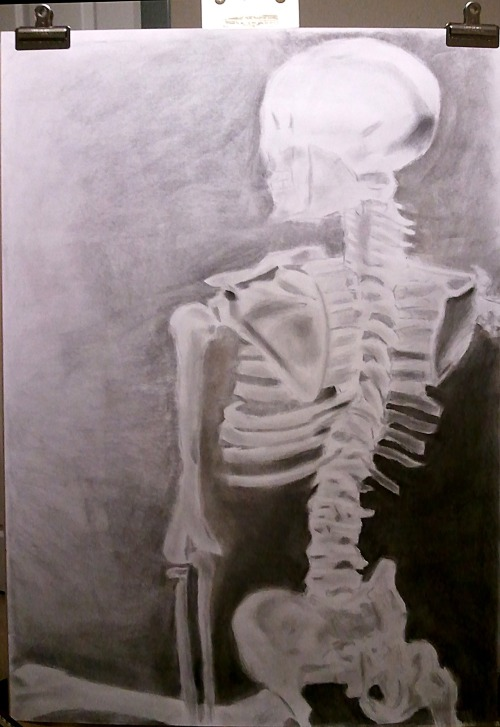 "24""x36"". First sustained drawing assignment from Drawing II. Study of Torso anatomy of the skeleton."
