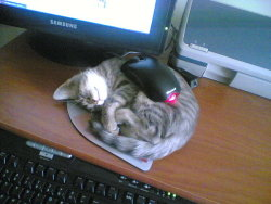 thatpunnyguy:  Haha, a cat and a mouse