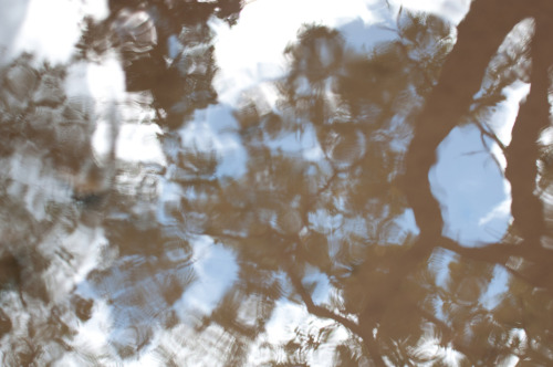 Warped reflection.  Circular Polarizing filter, trees and sky reflected in a small stream. Taken near Zenith, WV.