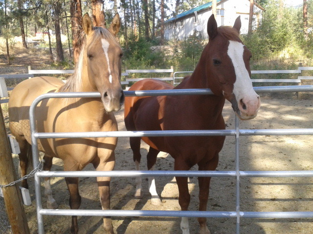 Hoover and his mare. She has got the prettiest coloring I have ever seen
