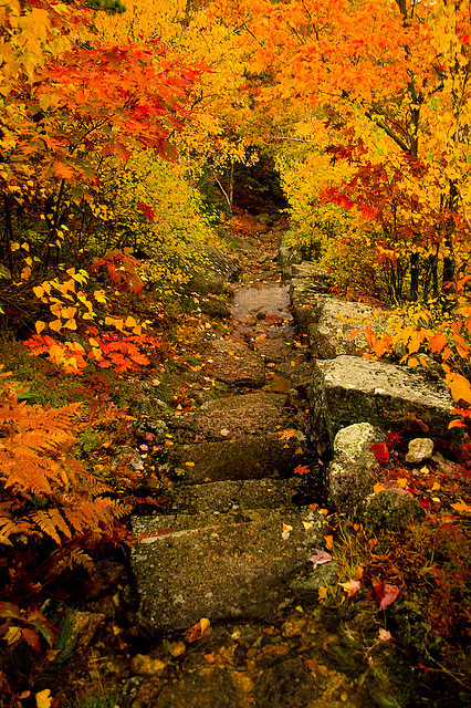 lori-rocks:  Journey to the Past, Dorr Mountain Trail, in Acadia by icemomo