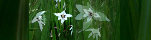 9/12 News from the Parkway: white flowers edition (photo credit: J.A. Ginsburg / CC BY-NC-ND /@TrackerNews)