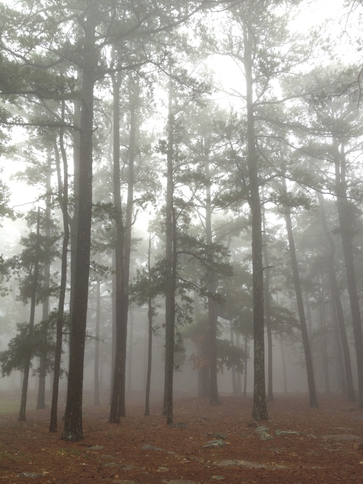 noahsiano:  Its a rainy day on the mountain. This place is so beautiful.Noah Siano