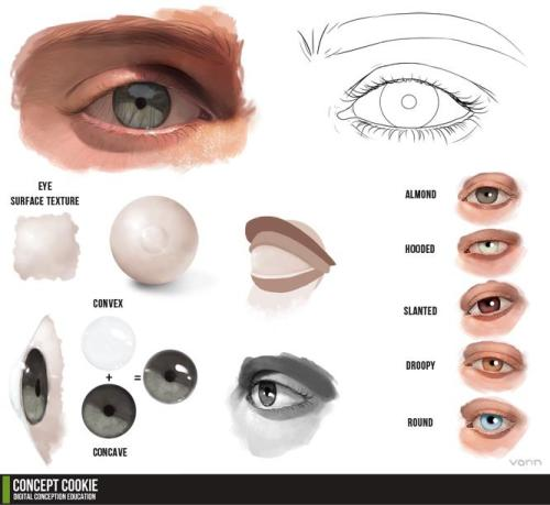 ceruleanboxers:  Eye Tutorial Resource by ~ConceptCookie
