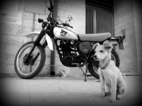 habermannandsons:  Yamaha XT 500