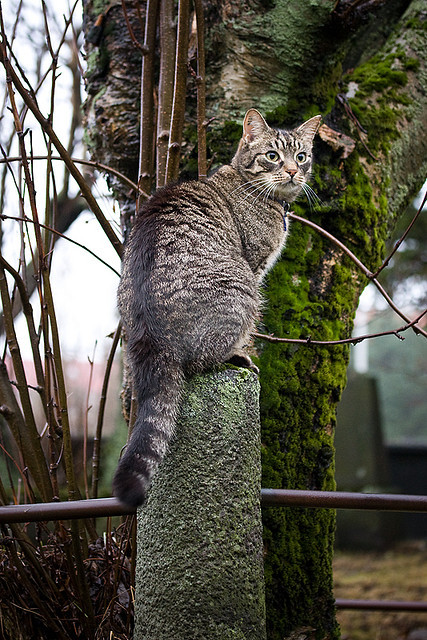cat at sunday 5 by Arnar Amason on Flickr.