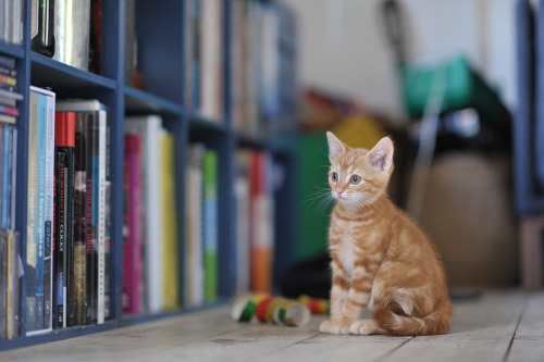 photogenicfelines:  (Fonsmark)