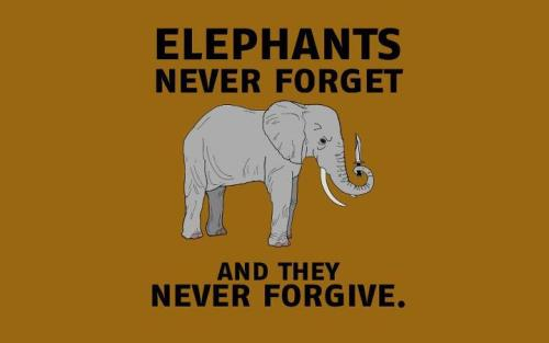Elephants never forget and they never forgive.