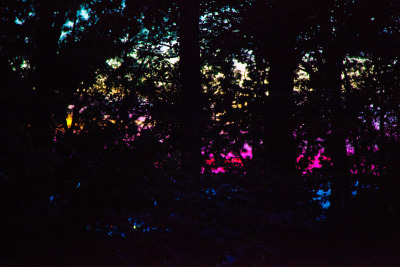 loveyourchaos:  dusk through the forest (by heatspine)