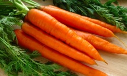 mayurasana:  10 Reasons to Eat More Carrots 1. Beta carotene: Carrots are a rich source of this powerful antioxidant, which, among other vital uses, can be converted into vitamin A in the body to help maintain healthy skin. 2. Digestion: Carrots increase saliva and supply essential minerals, vitamins and enzymes that aid in digestion. Eating carrots regularly may help prevent gastric ulcers and other digestive disorders. 3. Alkaline elements: Carrots are rich in alkaline elements, which purify and revitalize the blood while balancing the acid/alkaline ratio of the body. 4. Potassium: Carrots are a good source of potassium, which can help maintain healthy sodium levels in the body, thereby helping to reduce elevated blood pressure levels. 5. Dental Health: Carrots kill harmful germs in the mouth and help prevent tooth decay. 6. Wounds: Raw or grated carrots can be used to help heal wounds, cuts and inflammation. 7. Phytonutrients: Among the many beneficial phytochemicals that carrots contain is a phytonutrient called falcarinol, which may reduce the risk of colon cancer and help promote overall colon health. 8. Carotenoids: Carrots are rich in carotenoids, which our bodies can use to help regulate blood sugar. 9.  Fiber: Carrots are high in soluble fiber, which may reduce cholesterol by binding the LDL form (the kind we don't want) and increasing the HDL form (the kind our body needs) to help reduce blood clots and prevent heart disease. 10. Eyes, hair, nails and more! The nutrients in carrots can improve the health of your eyes, skin, hair, nails and more through helping to detoxify your system and build new cells!