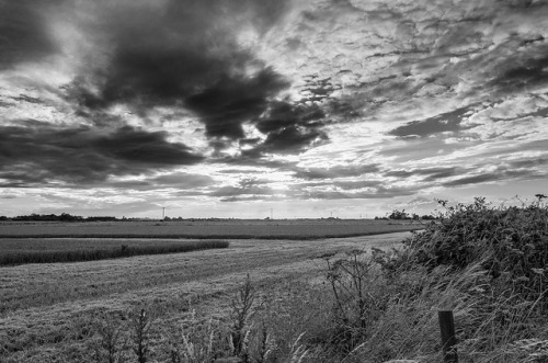Black & White Fields on Flickr.Via Flickr: Wheat fields, Eccles-On-Sea, Norfolk. Shot on a Nikon D5100 and post processed in Lightroom. Image by Gary Danton, August 2012.Twitter | Facebook | Blog
