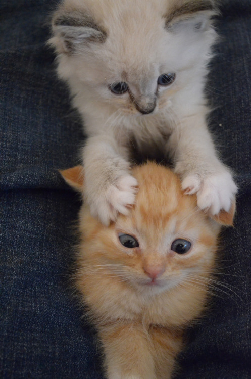 leimailemaow:  hehe massage for the headache