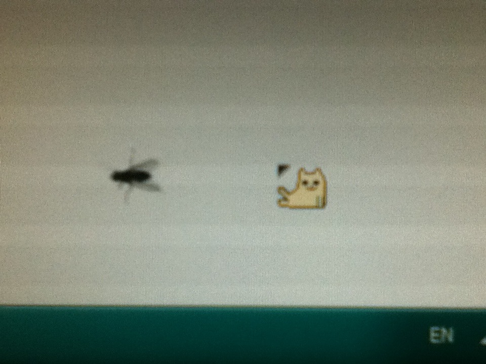 darrenboyd:  tryin' to seduce this fly with my cursor