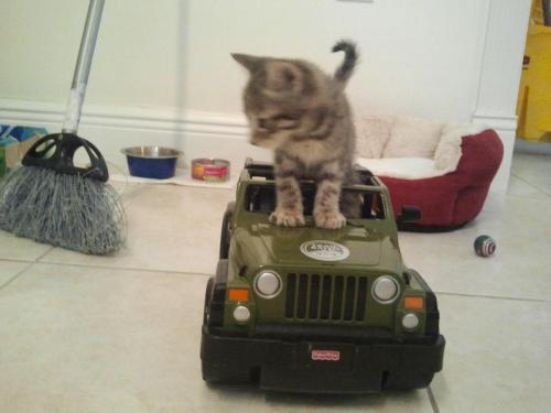 getoutoftherecat:  get off of there cat. you can't drive. you don't even fit.
