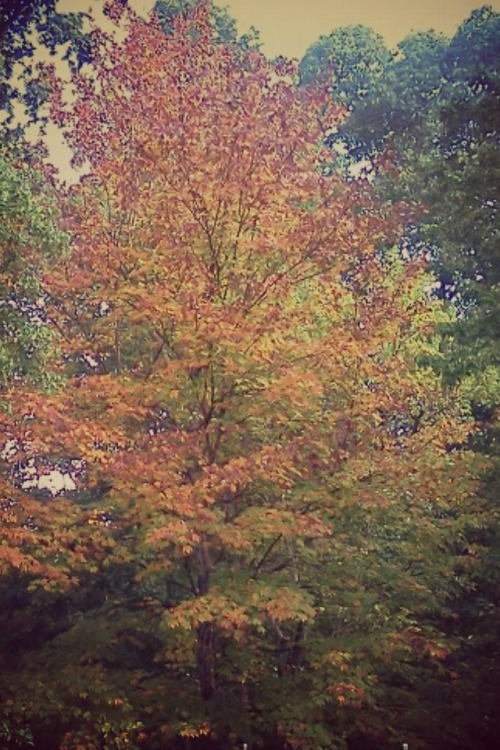 allygatorrs:  Autumn is in the Air