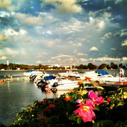 Vastervik, Sweden! #island #instagram #sweden #boats #water #pink #flowers #vastervik #travel #harbor #sunset  (Taken with Instagram)