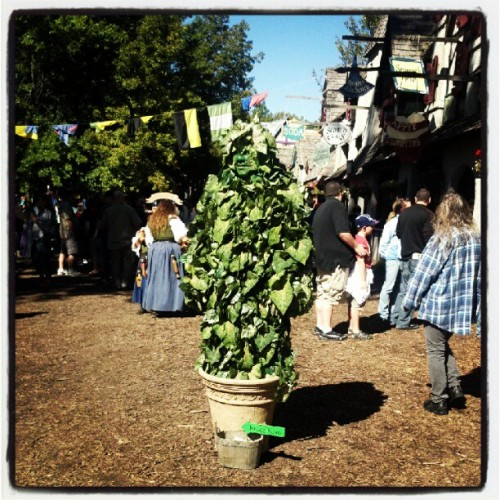 #plant #life #Michigan #renaissance#festival (Taken with Instagram)